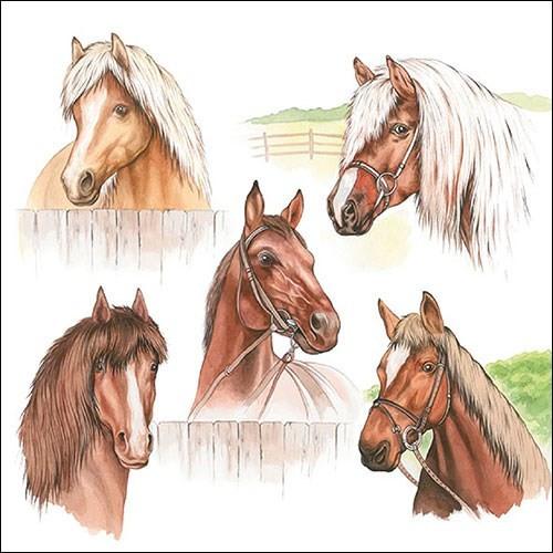 BS AM Servietten Horse Range